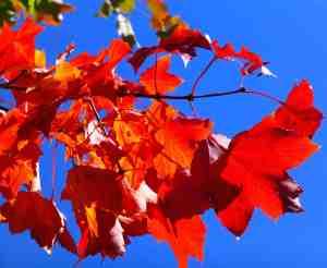autumnhike1
