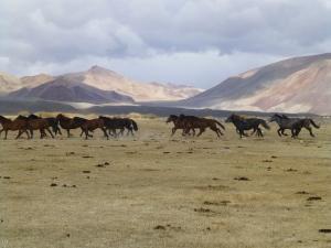 mongoliablog1
